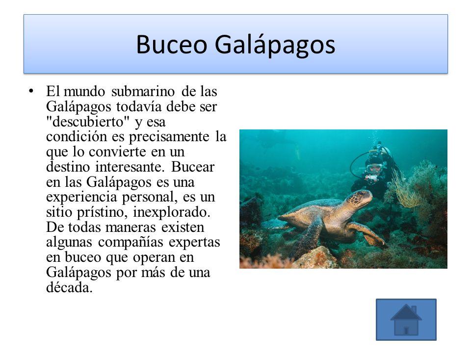 Buceo Galápagos El mundo submarino de las Galápagos todavía debe ser