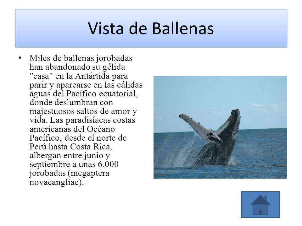 Vista de Ballenas Miles de ballenas jorobadas han abandonado su gélida
