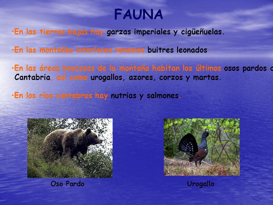 FAUNA En las tierras bajas hay garzas imperiales y cigüeñuelas. En las montañas interiores tenemos buitres leonados. En las áreas boscosas de la monta