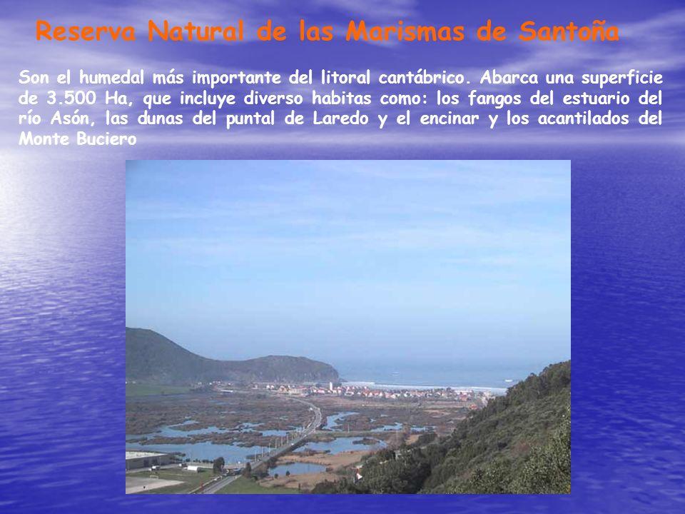 Reserva Natural de las Marismas de Santoña Son el humedal más importante del litoral cantábrico. Abarca una superficie de 3.500 Ha, que incluye divers