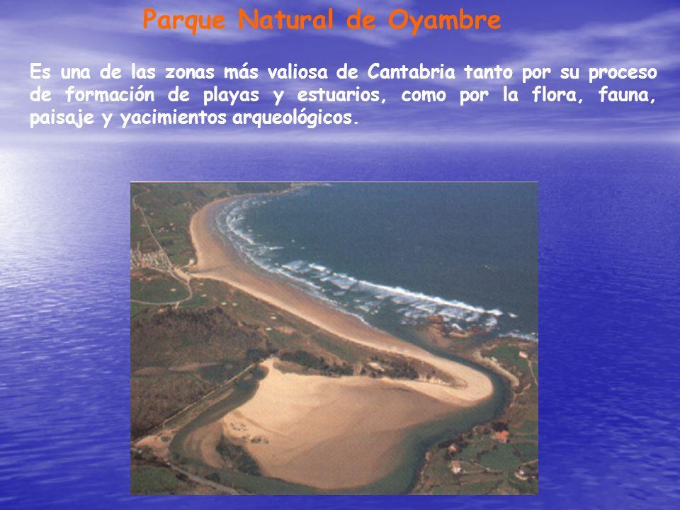 Parque Natural de Oyambre Es una de las zonas más valiosa de Cantabria tanto por su proceso de formación de playas y estuarios, como por la flora, fau