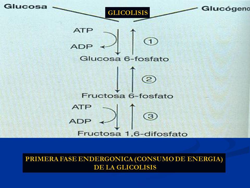 PRIMERA FASE ENDERGONICA (CONSUMO DE ENERGIA) DE LA GLICOLISIS GLICOLISIS