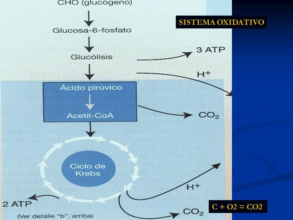 SISTEMA OXIDATIVO C + O2 = CO2