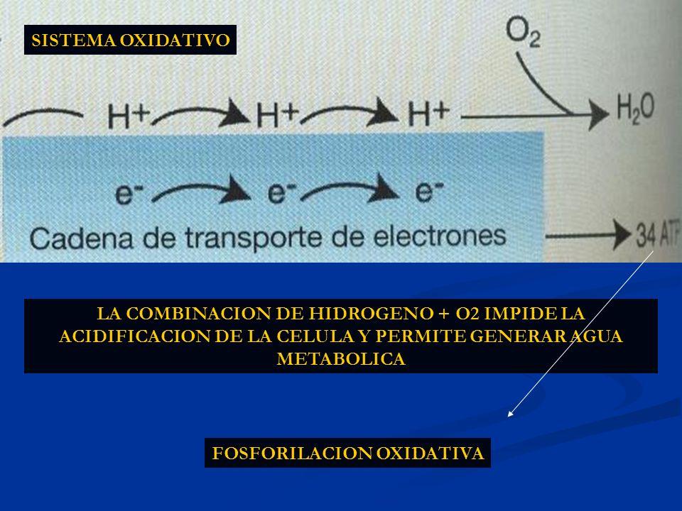 LA COMBINACION DE HIDROGENO + O2 IMPIDE LA ACIDIFICACION DE LA CELULA Y PERMITE GENERAR AGUA METABOLICA FOSFORILACION OXIDATIVA