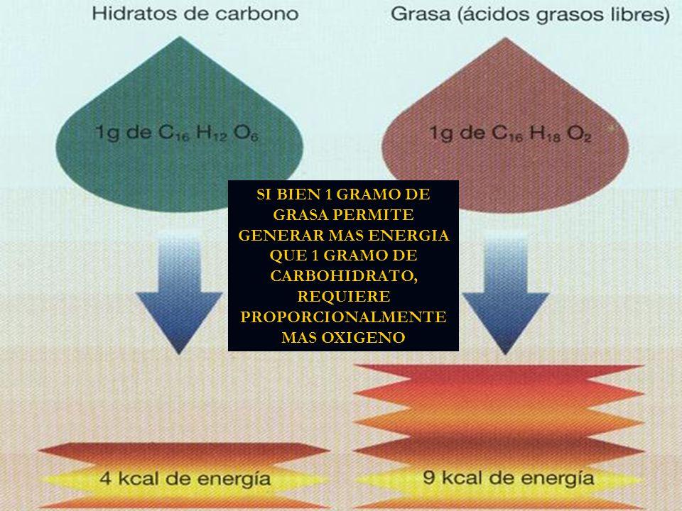 SI BIEN 1 GRAMO DE GRASA PERMITE GENERAR MAS ENERGIA QUE 1 GRAMO DE CARBOHIDRATO, REQUIERE PROPORCIONALMENTE MAS OXIGENO