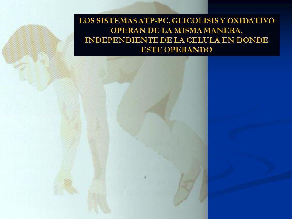 LOS SISTEMAS ATP-PC, GLICOLISIS Y OXIDATIVO OPERAN DE LA MISMA MANERA, INDEPENDIENTE DE LA CELULA EN DONDE ESTE OPERANDO
