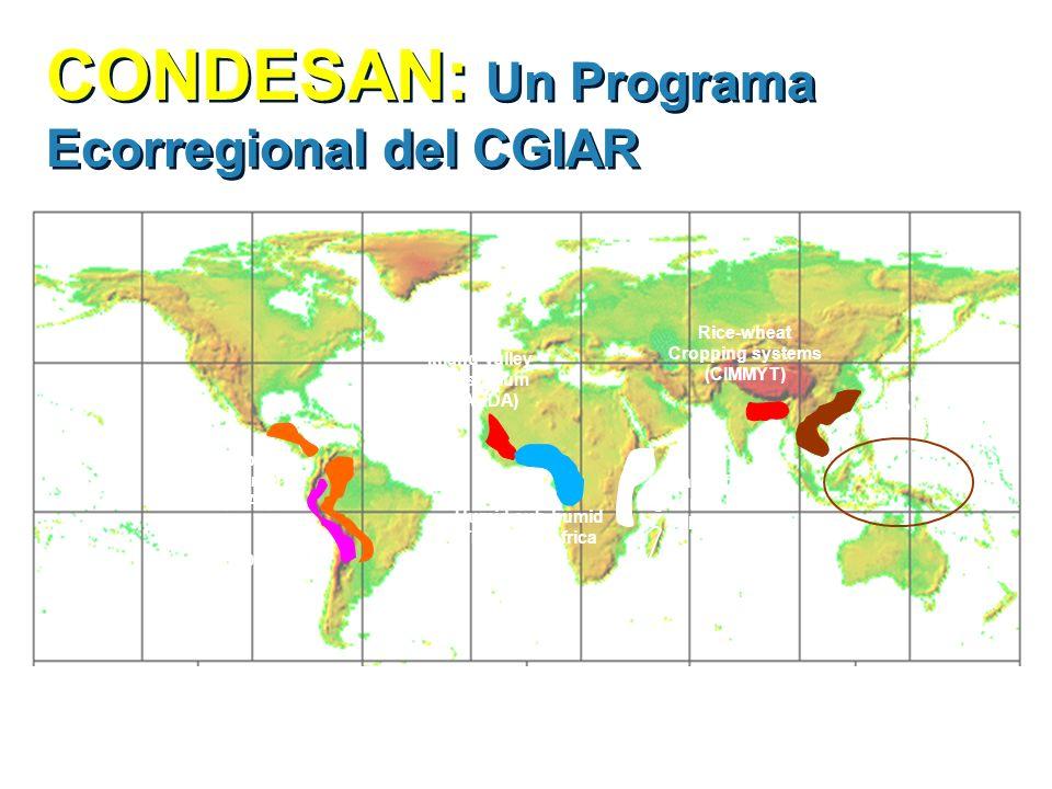 CONDESAN: Un Programa Ecorregional del CGIAR Humid sub-humid Tropics of Africa (IITA) Tropical Latin America (CIAT) Inland valley Consortium (WARDA) R