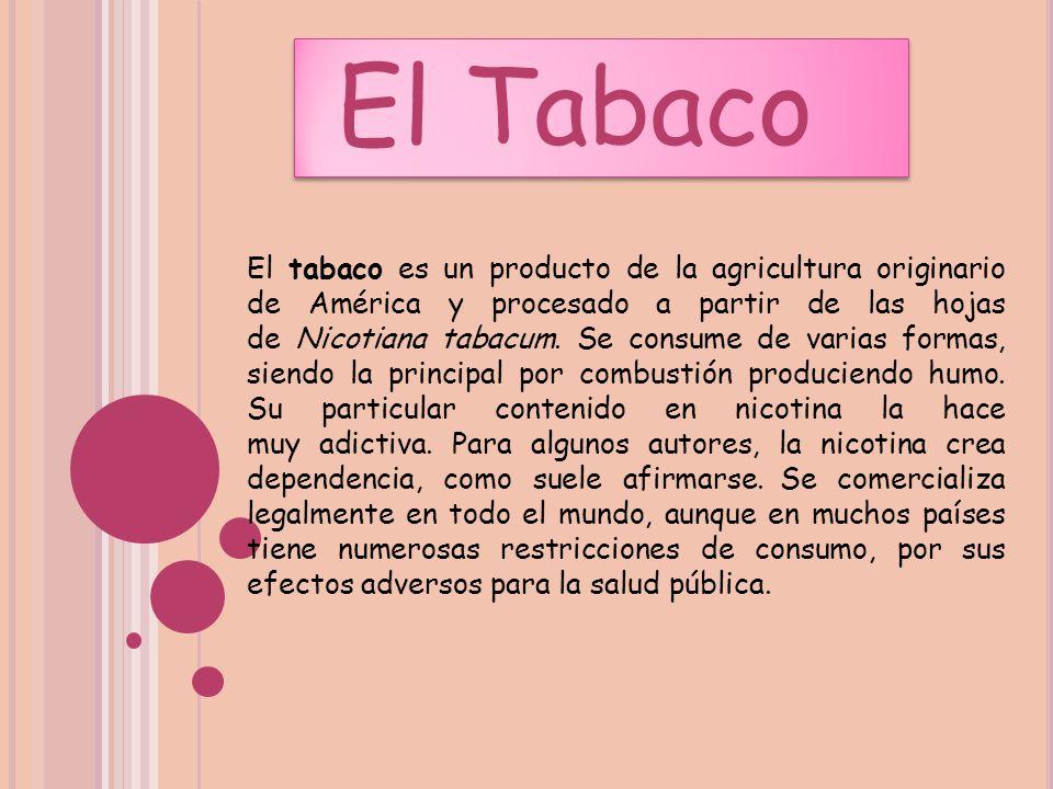 El Tabaco El tabaco es un producto de la agricultura originario de América y procesado a partir de las hojas de Nicotiana tabacum.