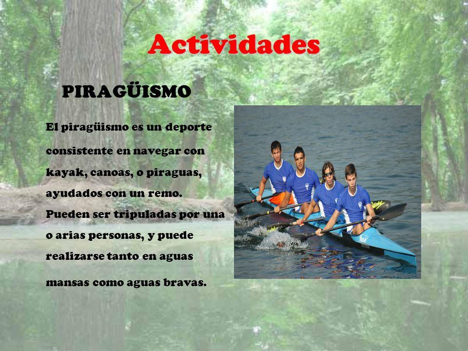Actividades PIRAGÜISMO El piragüismo es un deporte consistente en navegar con kayak, canoas, o piraguas, ayudados con un remo. Pueden ser tripuladas p