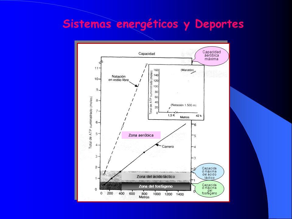 SISTEMAS ENERGETICOS / DEPORTES Sistema del fosfágeno J 100 metros planos J Salto J Levantamiento de peso Sistema del glucógeno- ácido láctico J 400 m