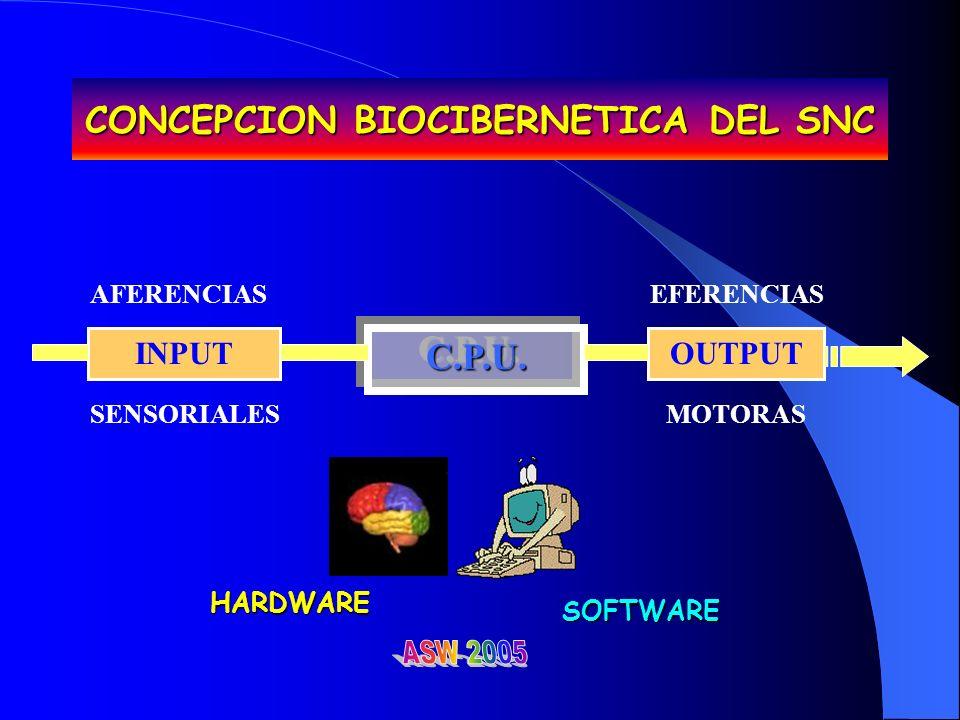 CONCEPCION BIOCIBERNETICA DEL SNC INPUT C.P.U.C.P.U.