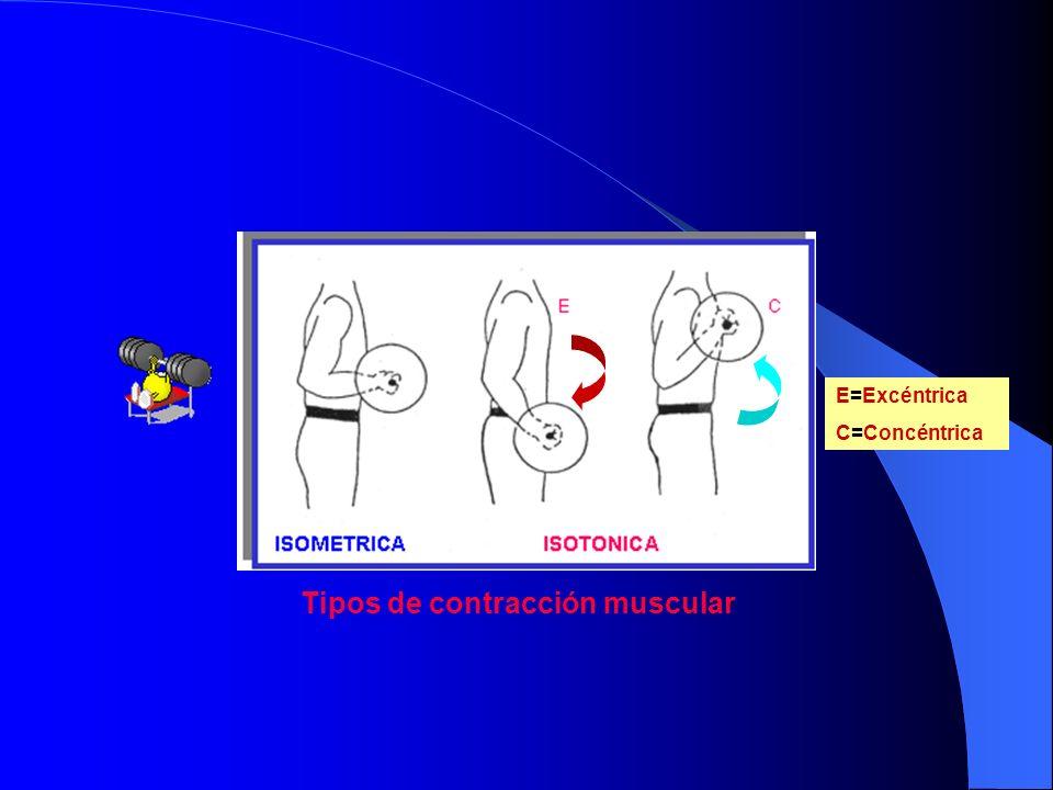 Tipos de contracción muscular E=Excéntrica C=Concéntrica