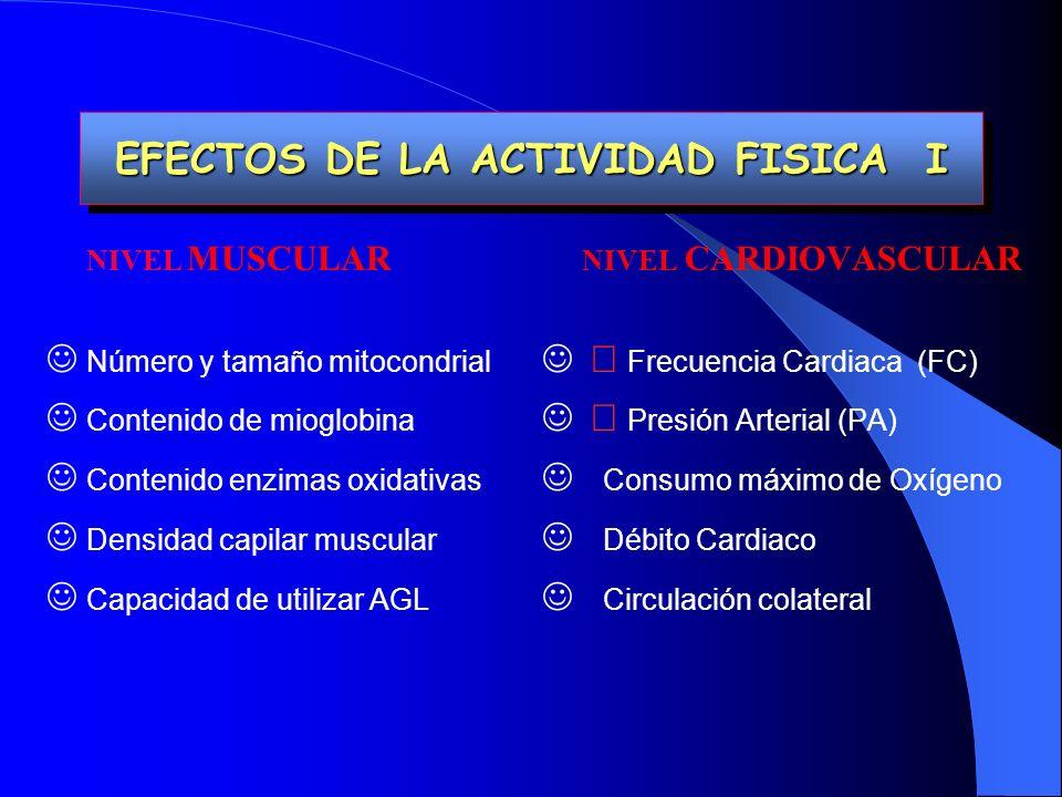 EFECTOS DE LA ACTIVIDAD FISICA I EFECTOS DE LA ACTIVIDAD FISICA I NIVEL MUSCULAR Número y tamaño mitocondrial Contenido de mioglobina Contenido enzimas oxidativas Densidad capilar muscular Capacidad de utilizar AGL NIVEL CARDIOVASCULAR Frecuencia Cardiaca (FC) Presión Arterial (PA) Consumo máximo de Oxígeno Débito Cardiaco Circulación colateral