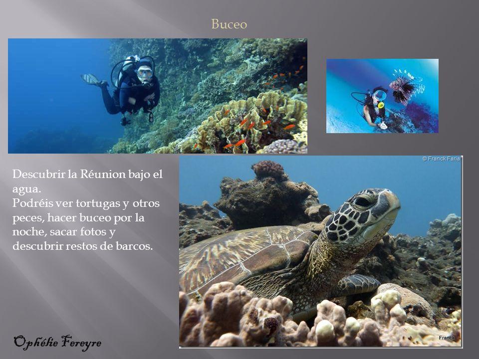 Descubrir la Réunion bajo el agua.
