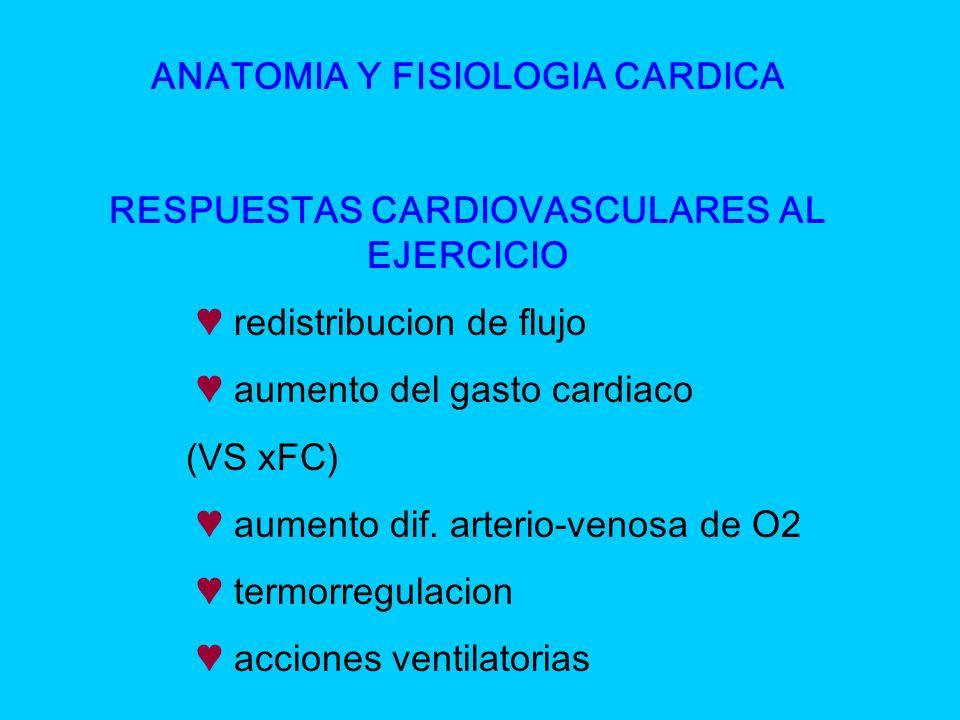 ANATOMIA Y FISIOLOGIA CARDICA RESPUESTAS CARDIOVASCULARES AL EJERCICIO redistribucion de flujo aumento del gasto cardiaco (VS xFC) aumento dif. arteri