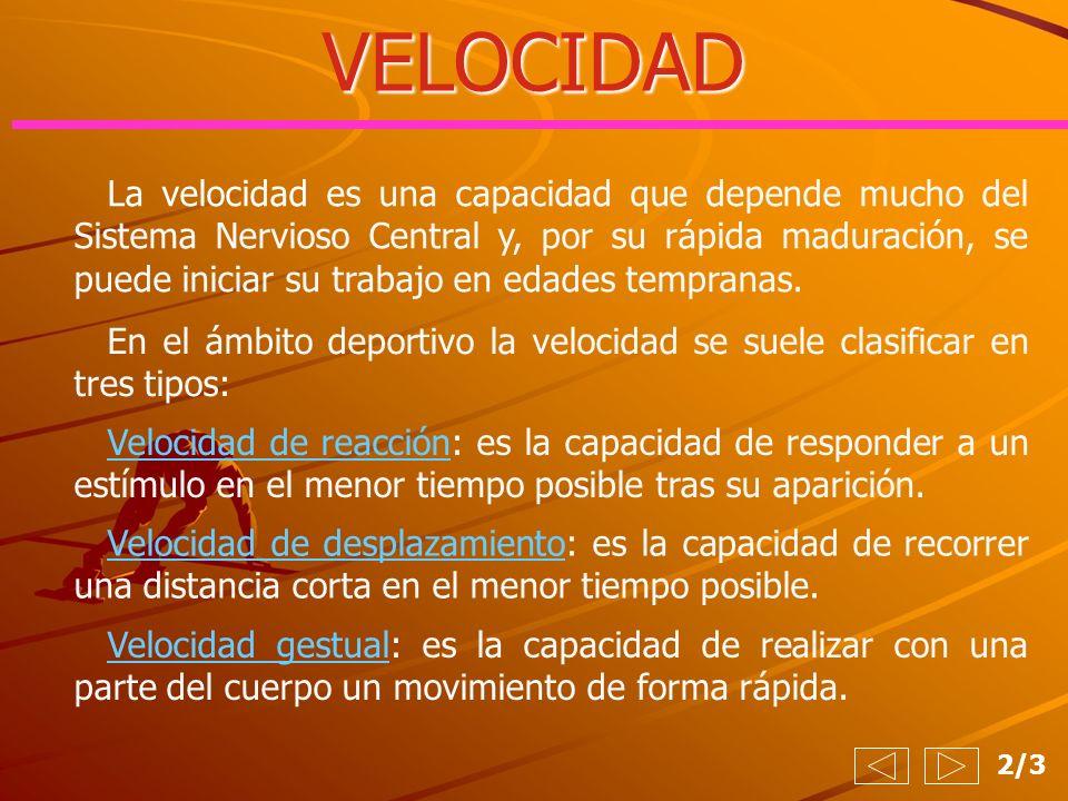 VELOCIDAD 2/3 La velocidad es una capacidad que depende mucho del Sistema Nervioso Central y, por su rápida maduración, se puede iniciar su trabajo en
