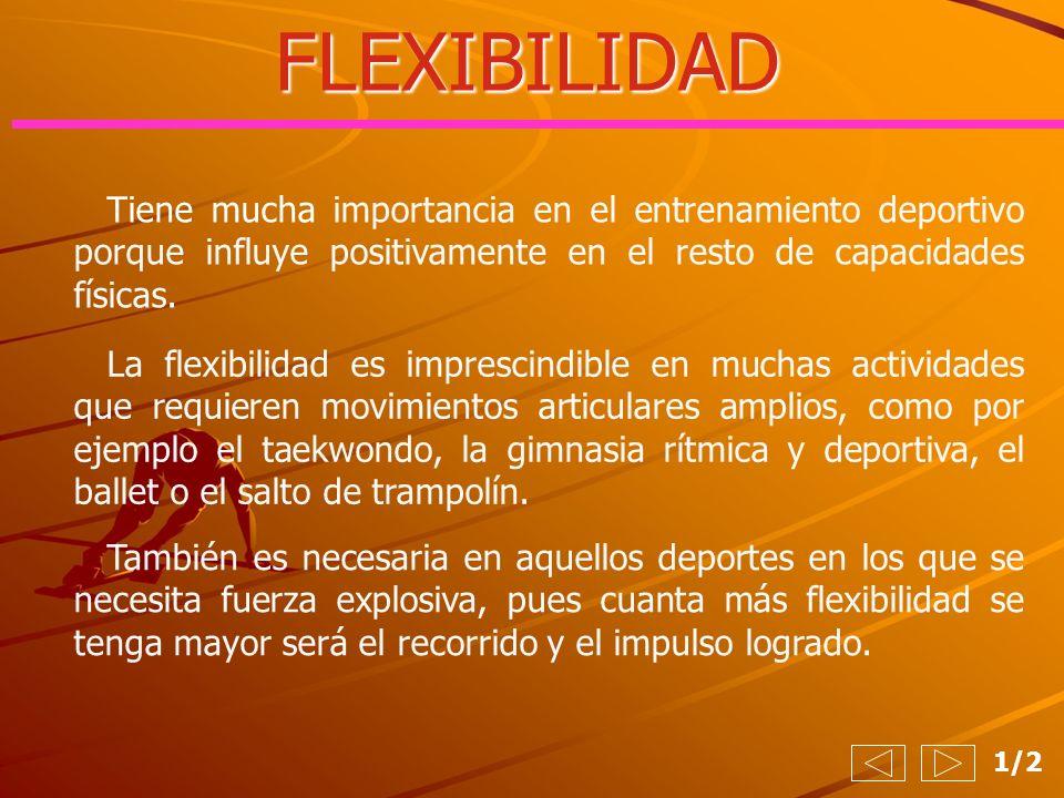 FLEXIBILIDAD 1/2 Tiene mucha importancia en el entrenamiento deportivo porque influye positivamente en el resto de capacidades físicas. La flexibilida