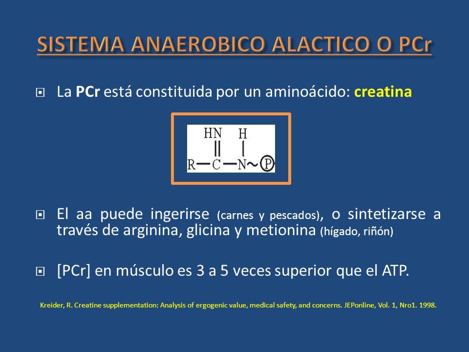 La PCr está constituida por un aminoácido: creatina El aa puede ingerirse (carnes y pescados), o sintetizarse a través de arginina, glicina y metionin