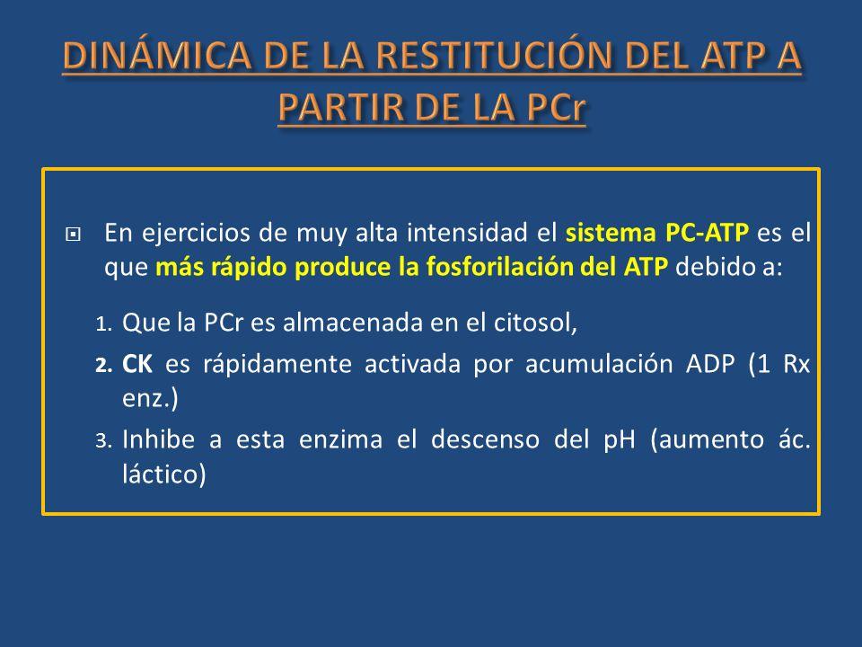 En ejercicios de muy alta intensidad el sistema PC-ATP es el que más rápido produce la fosforilación del ATP debido a: 1. Que la PCr es almacenada en