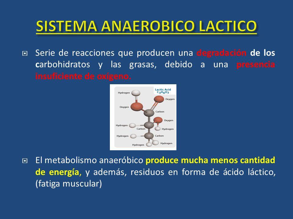 Serie de reacciones que producen una degradación de los carbohidratos y las grasas, debido a una presencia insuficiente de oxígeno. El metabolismo ana