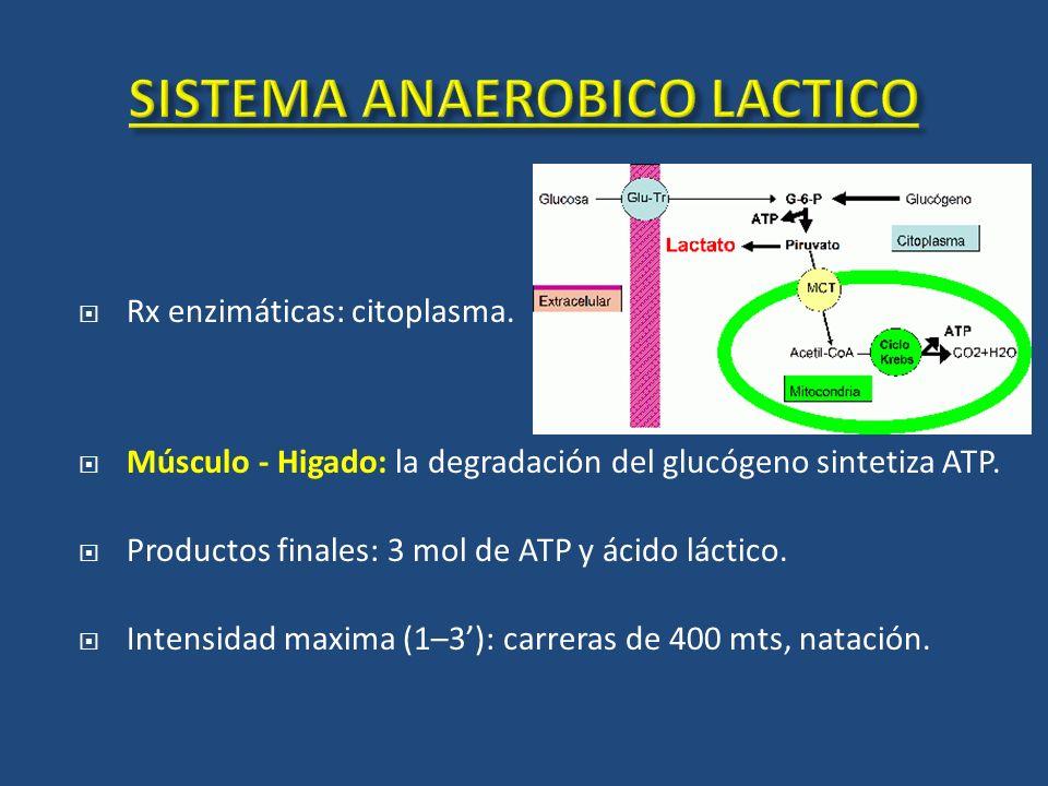 Rx enzimáticas: citoplasma. Músculo - Higado: la degradación del glucógeno sintetiza ATP. Productos finales: 3 mol de ATP y ácido láctico. Intensidad