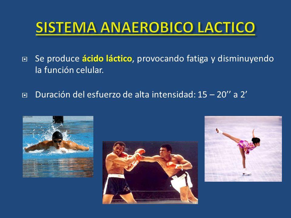 Se produce ácido láctico, provocando fatiga y disminuyendo la función celular. Duración del esfuerzo de alta intensidad: 15 – 20 a 2