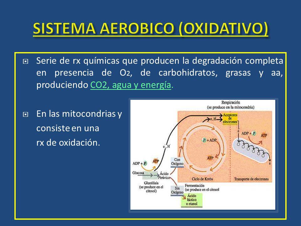 Serie de rx químicas que producen la degradación completa en presencia de O 2, de carbohidratos, grasas y aa, produciendo CO2, agua y energía. En las