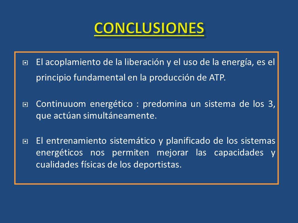 El acoplamiento de la liberación y el uso de la energía, es el principio fundamental en la producción de ATP. Continuuom energético : predomina un sis