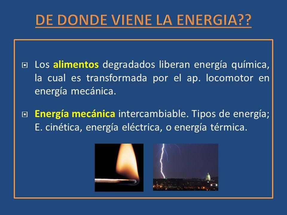 Los alimentos degradados liberan energía química, la cual es transformada por el ap. locomotor en energía mecánica. Energía mecánica intercambiable. T