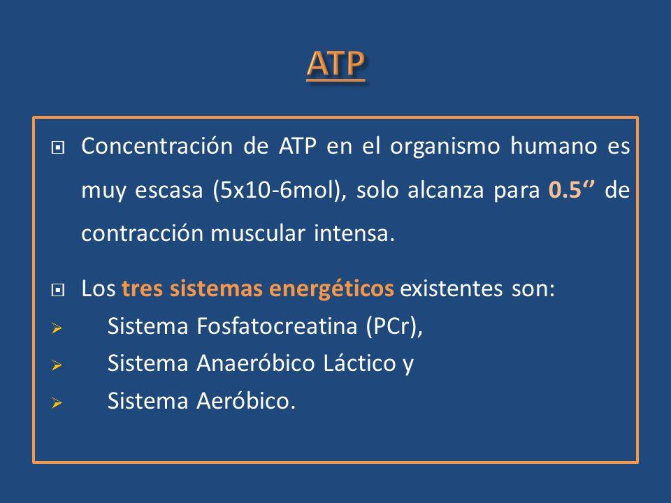 Concentración de ATP en el organismo humano es muy escasa (5x10-6mol), solo alcanza para 0.5 de contracción muscular intensa. Los tres sistemas energé
