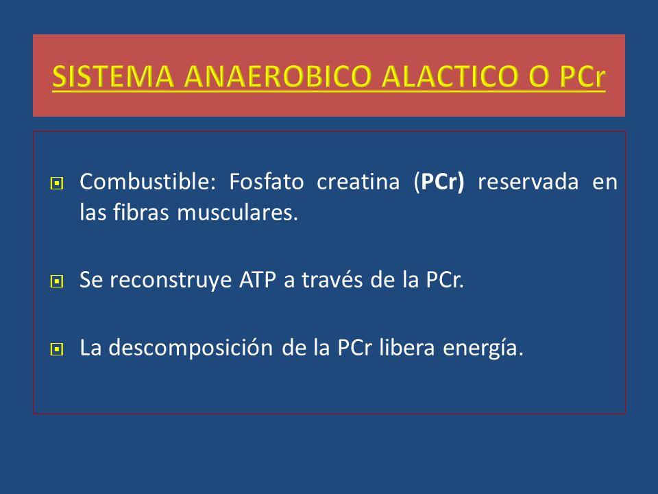 Combustible: Fosfato creatina (PCr) reservada en las fibras musculares. Se reconstruye ATP a través de la PCr. La descomposición de la PCr libera ener