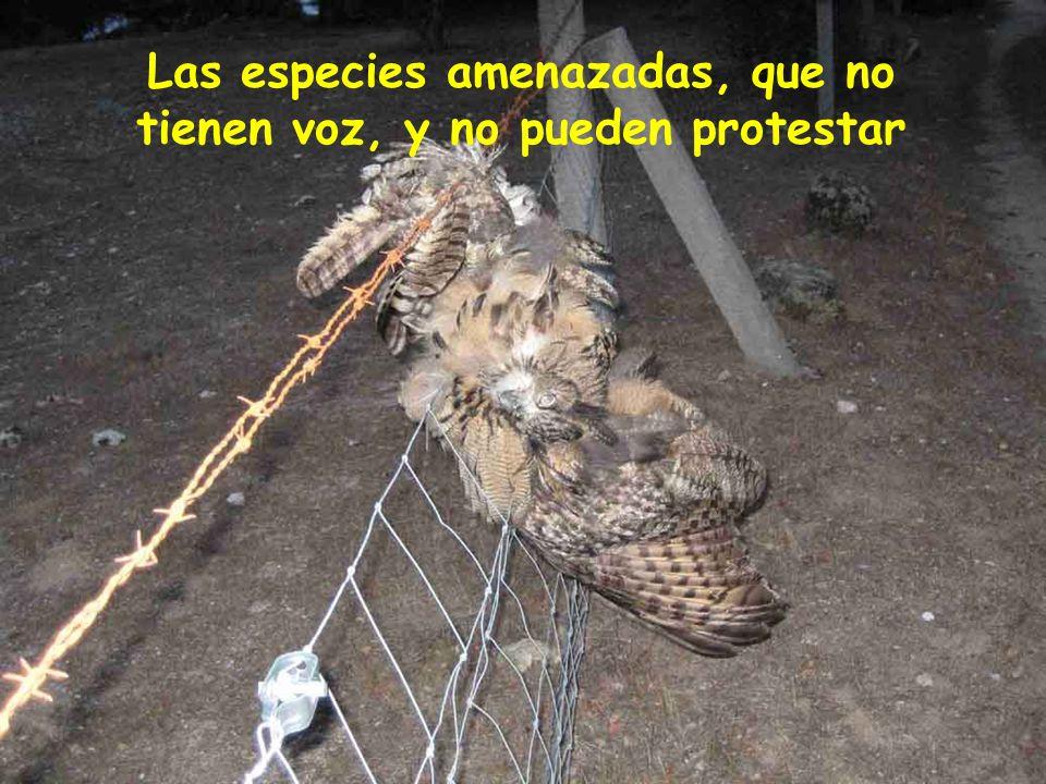 Las especies amenazadas, que no tienen voz, y no pueden protestar
