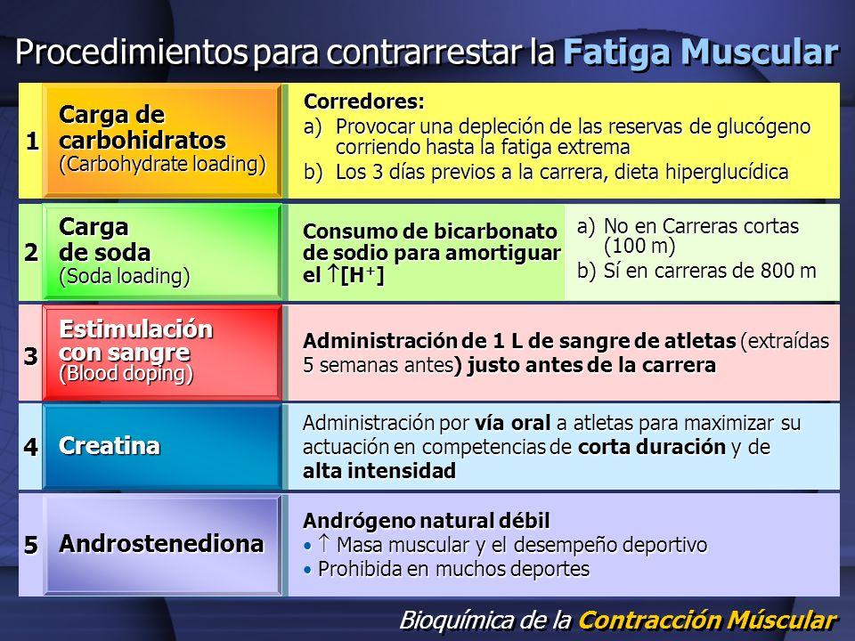 Bioquímica de la Contracción Múscular Procedimientos para contrarrestar la Fatiga Muscular 1 Carga de carbohidratos (Carbohydrate loading) Corredores: