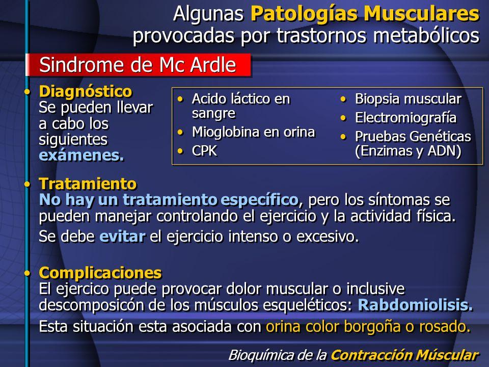 Bioquímica de la Contracción Múscular Algunas Patologías Musculares provocadas por trastornos metabólicos Algunas Patologías Musculares provocadas por