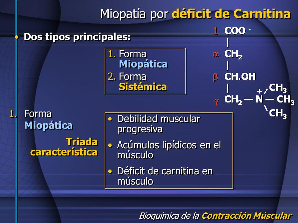 Bioquímica de la Contracción Múscular Miopatía por déficit de Carnitina 1.Forma Miopática 2.Forma Sistémica 1.Forma Miopática 2.Forma Sistémica 1.Form