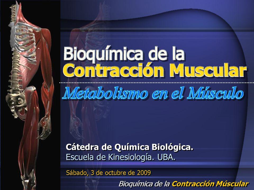 Bioquímica de la Contracción Múscular Sábado, 3 de octubre de 2009 Cátedra de Química Biológica. Escuela de Kinesiología. UBA. Cátedra de Química Biol
