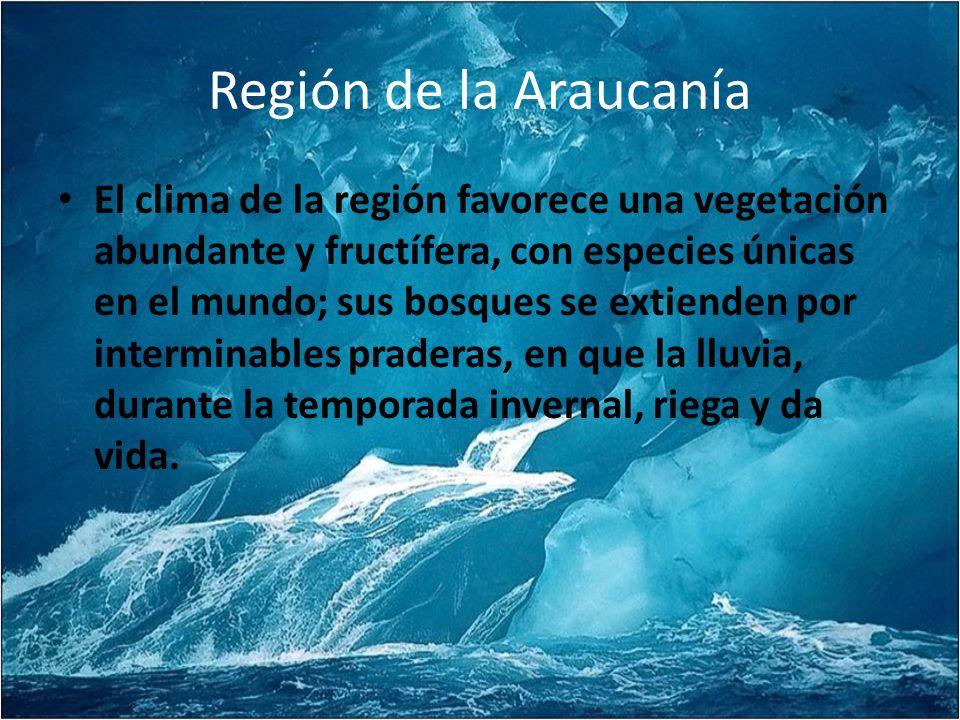 Región de la Araucanía El clima de la región favorece una vegetación abundante y fructífera, con especies únicas en el mundo; sus bosques se extienden por interminables praderas, en que la lluvia, durante la temporada invernal, riega y da vida.
