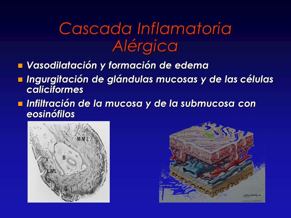 Cascada Inflamatoria Alérgica Vasodilatación y formación de edema Vasodilatación y formación de edema Ingurgitación de glándulas mucosas y de las célu