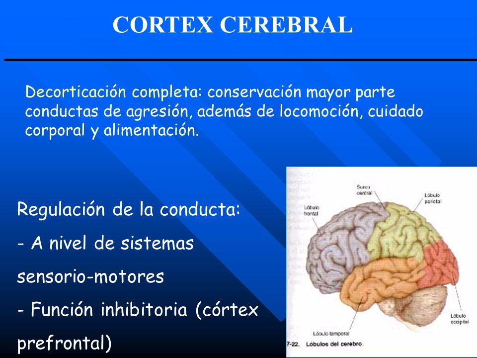 Regulación de la conducta: - A nivel de sistemas sensorio-motores - Función inhibitoria (córtex prefrontal) Decorticación completa: conservación mayor