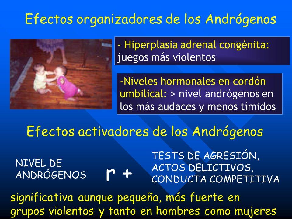 Efectos organizadores de los Andrógenos - Hiperplasia adrenal congénita: juegos más violentos -Niveles hormonales en cordón umbilical: > nivel andróge