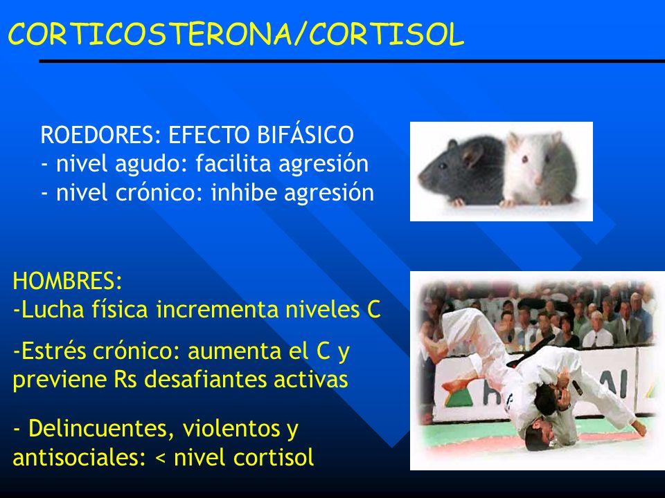 CORTICOSTERONA/CORTISOL ROEDORES: EFECTO BIFÁSICO - nivel agudo: facilita agresión - nivel crónico: inhibe agresión HOMBRES: -Lucha física incrementa