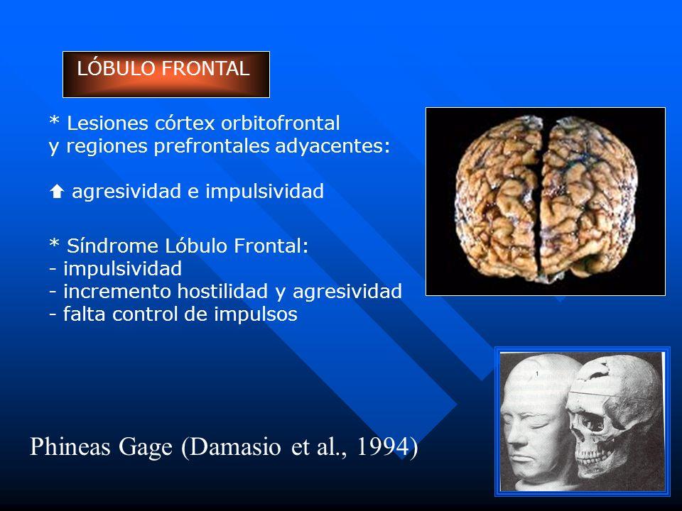 LÓBULO FRONTAL * Lesiones córtex orbitofrontal y regiones prefrontales adyacentes: agresividad e impulsividad * Síndrome Lóbulo Frontal: - impulsivida
