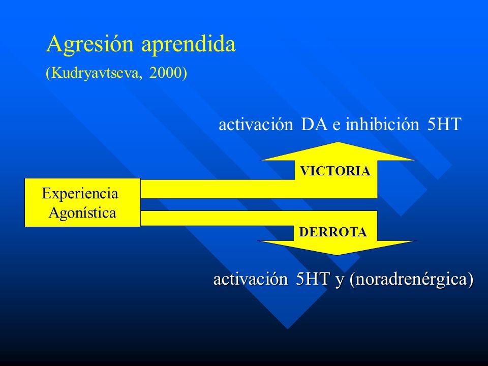 activación 5HT y (noradrenérgica) activación DA e inhibición 5HT VICTORIA DERROTA Experiencia Agonística Agresión aprendida (Kudryavtseva, 2000)