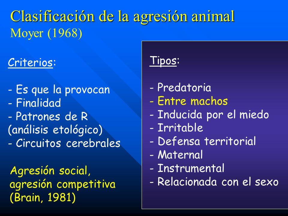 Criterios: - Es que la provocan - Finalidad - Patrones de R (análisis etológico) - Circuitos cerebrales Tipos: - Predatoria - Entre machos - Inducida