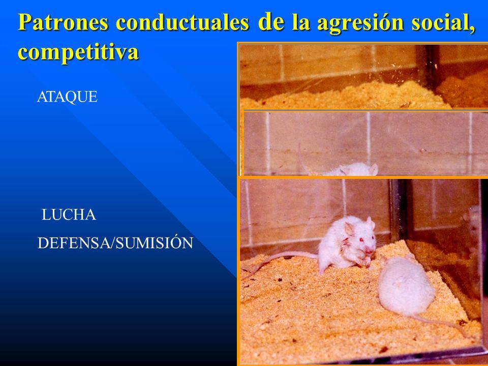 Patrones conductuales de la agresión social, competitiva ATAQUE LUCHA DEFENSA/SUMISIÓN
