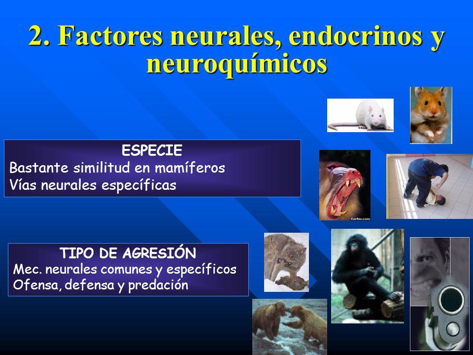 2. Factores neurales, endocrinos y neuroquímicos ESPECIE Bastante similitud en mamíferos Vías neurales específicas TIPO DE AGRESIÓN Mec. neurales comu