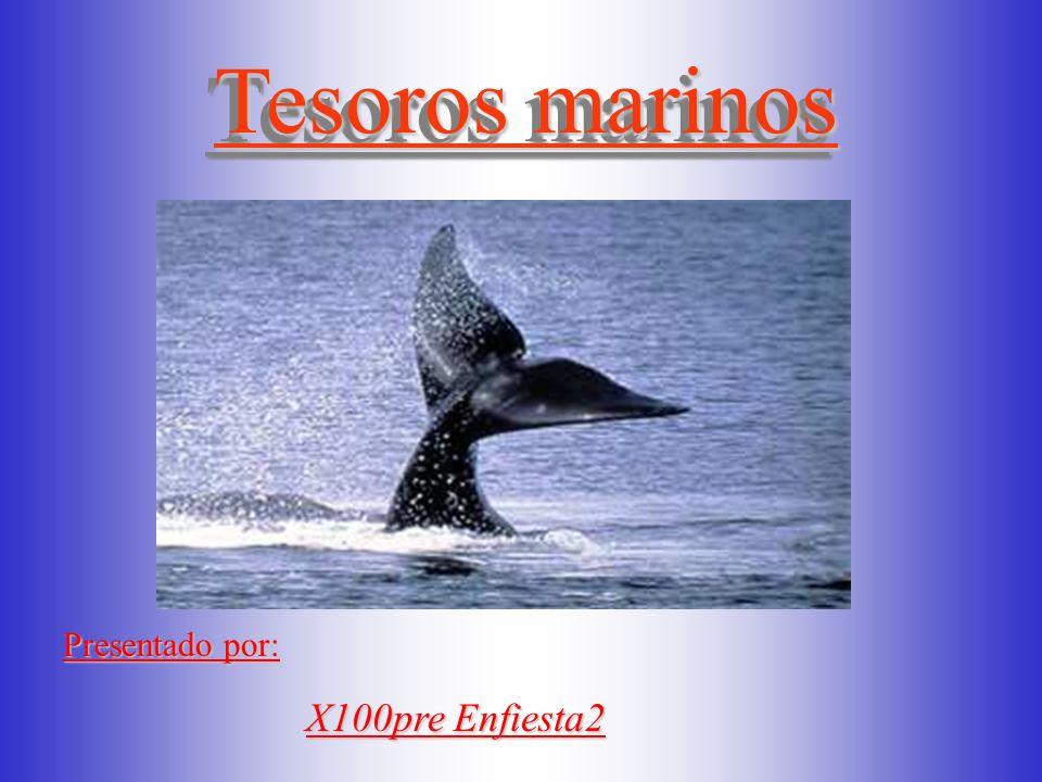 Tesoros marinos Tesoros marinos Presentado por: X100pre Enfiesta2