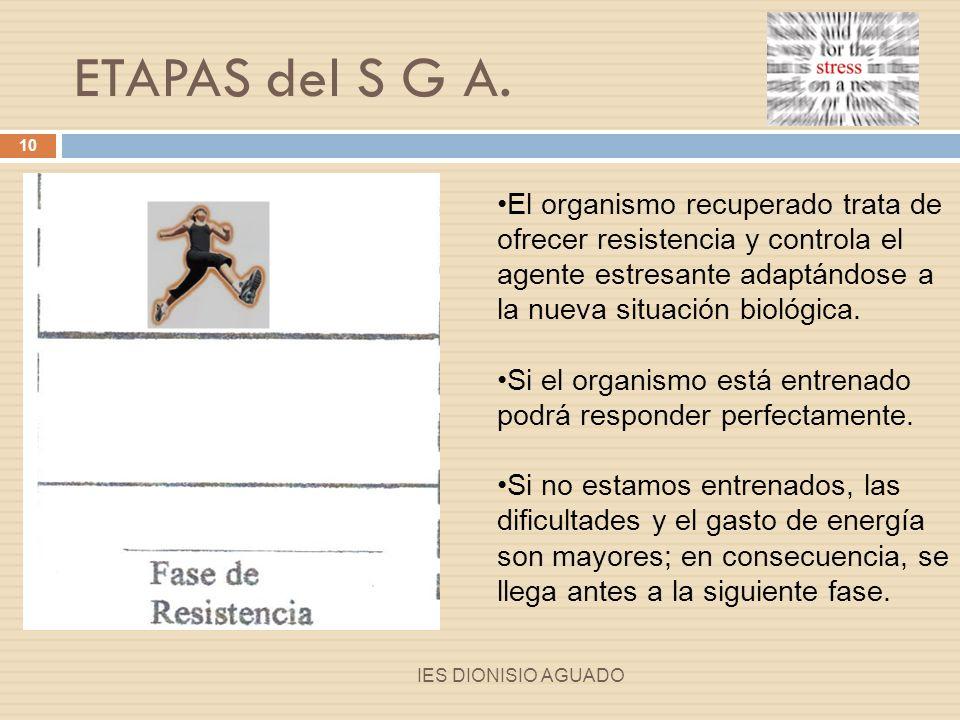 ETAPAS del S G A.