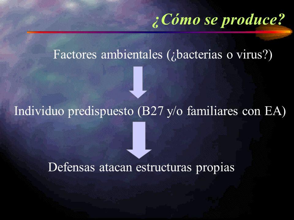 ¿Cómo se produce? Factores ambientales (¿bacterias o virus?) Individuo predispuesto (B27 y/o familiares con EA) Defensas atacan estructuras propias