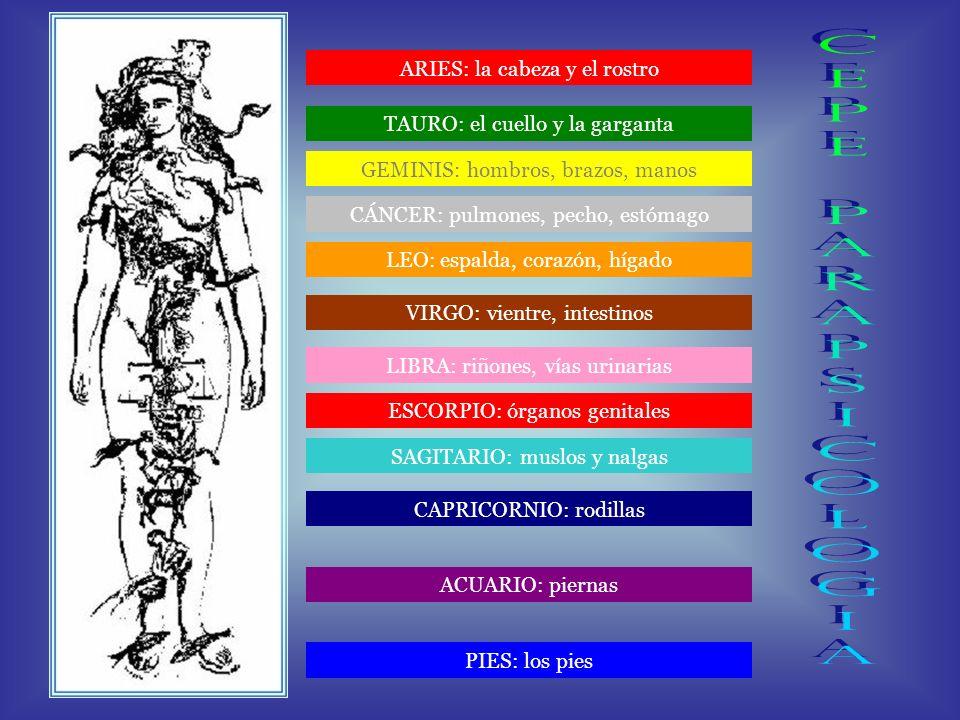 ARIES: la cabeza y el rostro TAURO: el cuello y la garganta GEMINIS: hombros, brazos, manos CÁNCER: pulmones, pecho, estómago LEO: espalda, corazón, hígado LIBRA: riñones, vías urinarias VIRGO: vientre, intestinos SAGITARIO: muslos y nalgas ESCORPIO: órganos genitales CAPRICORNIO: rodillas ACUARIO: piernas PIES: los pies